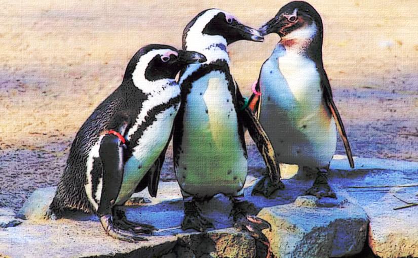 Picture Tubes: Penguins
