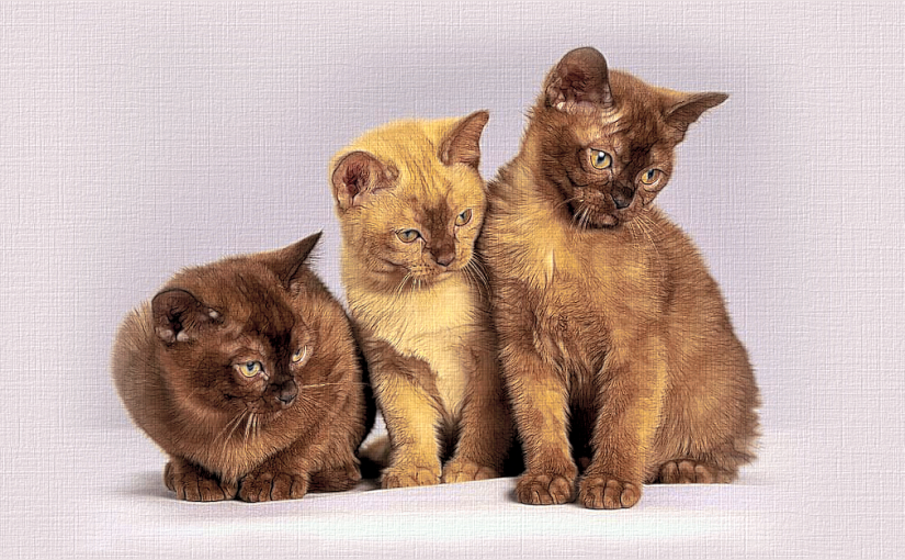 Picture Tubes: Cats
